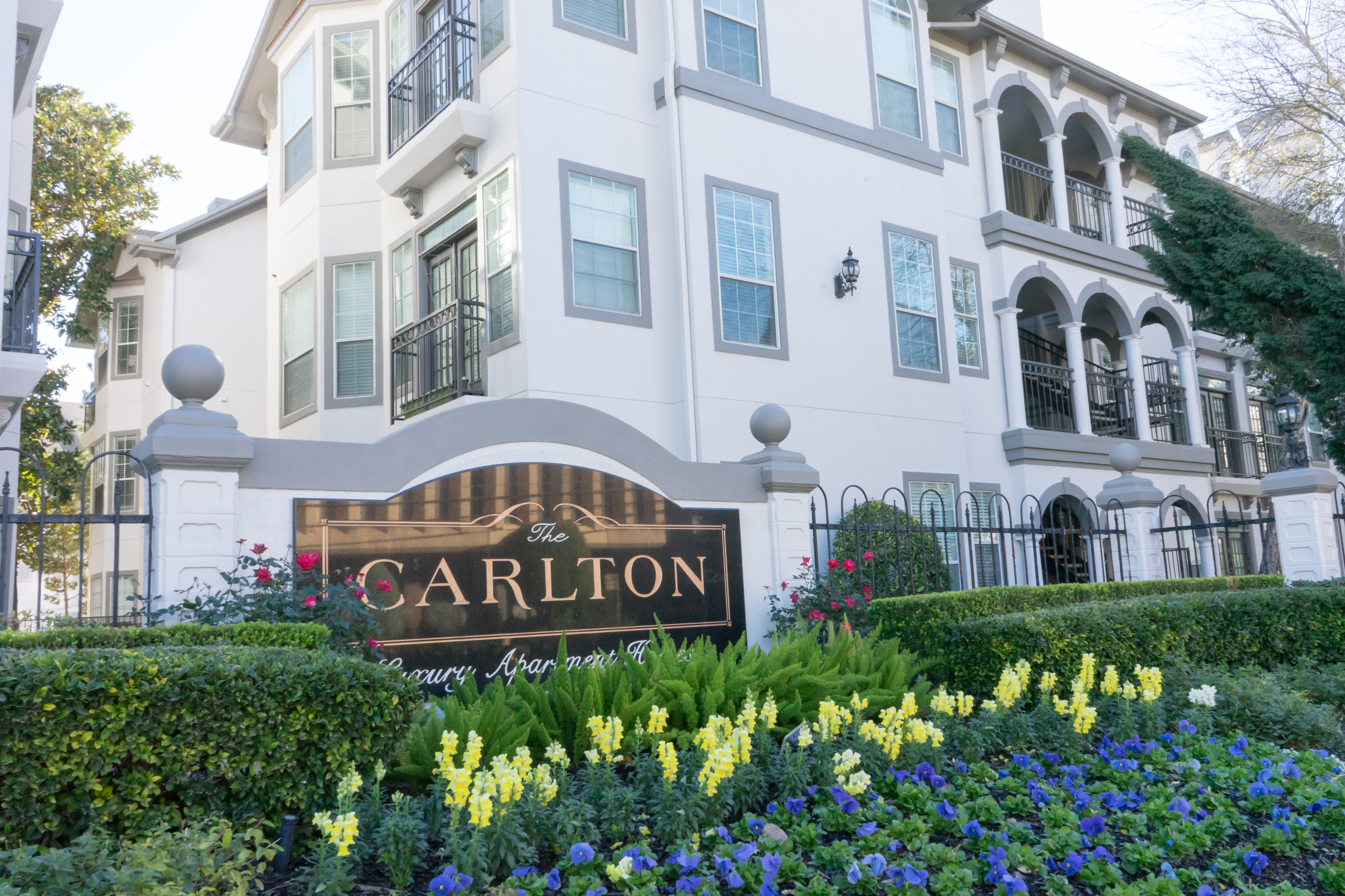The Carlton for rent